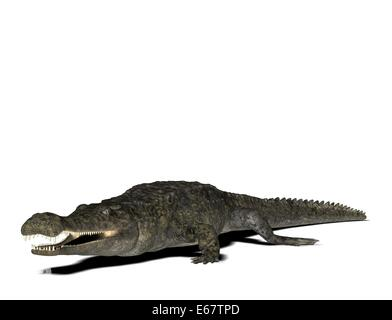Sarcosuchus / Sarcosuchus - Stock Image