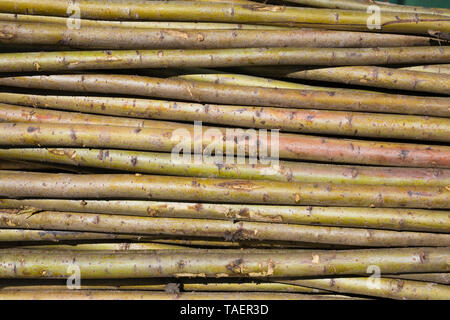 Stack of cut small deciduous tree trunks, Montreal, Quebec, Canada - Stock Image