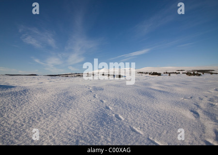 Snowy field with Ben Wyvis in the background - Stock Image