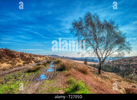 Barbrook, Derbyshire, UK. 30th March, 2019. UK Weather: Bright blue sky on a warm sunny day in the Barbrook Valley, Peak District. HDR landscape photography. Credit: Doug Blane/Alamy Live News - Stock Image