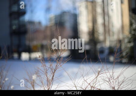 A closeup of brown tree branches. On the background there is an urban landscape including buildings, trees and blue sky. - Stock Image