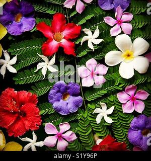 Tropical flowers displayed on fern fronds - Stock Image
