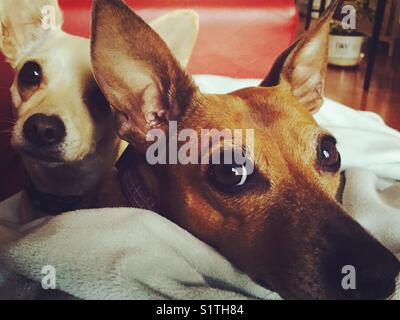 Dog love - Stock Image