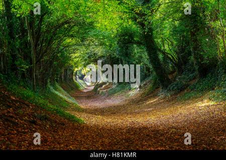 Halnaker roman road, West Sussex in Autumn - Stock Image