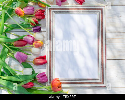 Colorful tulips around wooden frame in spring sunlights. Spring background. - Stock Image