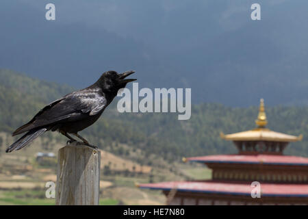 Bhutan's national bird is the raven - Stock Image