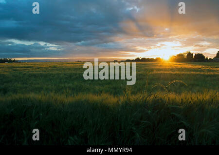 The sun sets over Woodland, CA - Stock Image