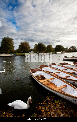 Swans amongst the boats on the River Avon in Stratford upon Avon, the birthplace of Shakespeare. - Stock Image