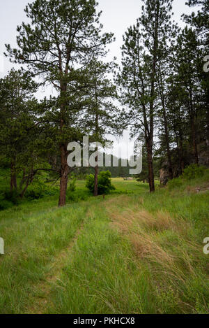 Grassy Trail Through Trees in Canyon in Black Hills - Stock Image