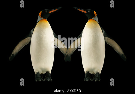 Two penguins holding hands - Stock Image
