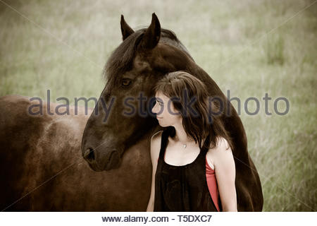 A woman and her friesian horse - Stock Image