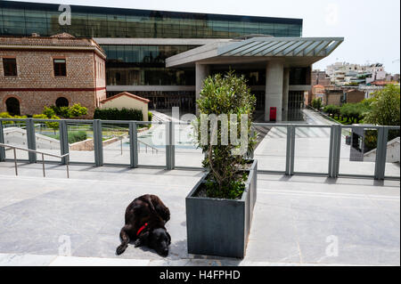 Athens, Greece. Dog in front of the new impressing Acropolis museum. - Stock Image
