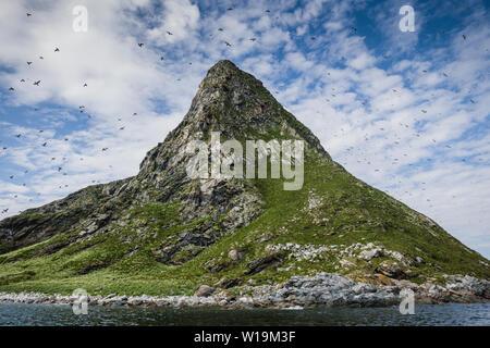 Bleiksøya birdcliff, Bleik, Andenes, Vesteralen, Andoya, Norway. - Stock Image