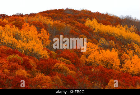 Vibrant autumn colors on a side hill. - Stock Image