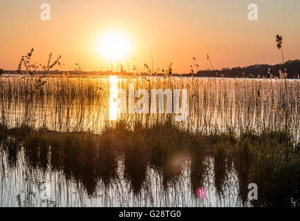 Sunset at lake Schwerin, reed in backlight, Schwerin cathedral in the back, Lake Schwerin, Schwerin, Germany - Stock Image