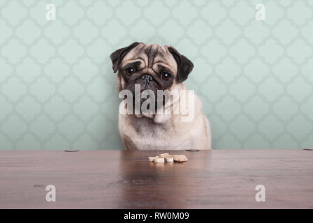 cute pitiful pug puppy dog on a no carbs diet sitting at wooden table with snacks in front, on pastel green background - Stock Image