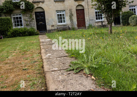 Lazy person's front garden with full of weeds, UK - Stock Image