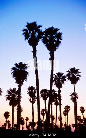 California Ventura Ventura Marina community palms at dusk - Stock Image