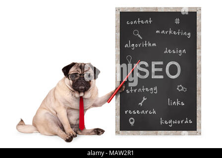 business pug dog holding red pointer, pointing out  search engine optimization, SEO, performance strategy, hand drawn on chalkboard, isolated on white - Stock Image