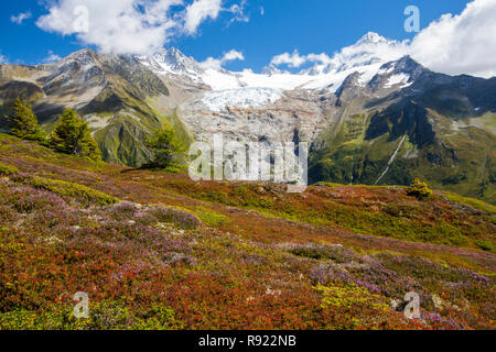 The Aiguillette des Posettes with Bilberry plants colouring up in late summer, above Chamonix, French Alps, and the rapidly retreating Glacier du tour. - Stock Image