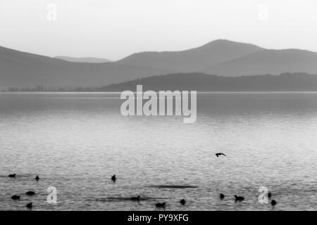 Beautiful view of a lake with birds on water - Stock Image