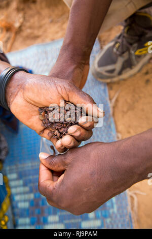 Kisambo Village, Yako, Burkina Faso, 28th November 2016; Sawadogo Asseta, 60, mother of 10,  with seeds of the dawa-dawa tree. - Stock Image
