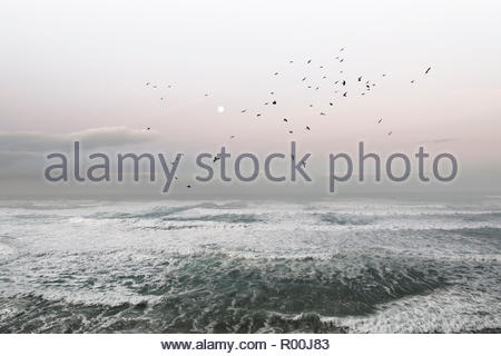 Flock of birds flying over sea in Portugal - Stock Image