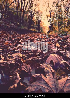 Foliage on the ground in a sunny winter day - Stock Image