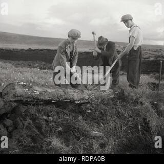 1950s, historical, men logging - Stock Image
