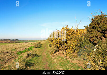 A public footpath on a circular walk with views over Blakeney Downs in North Norfolk at Blakeney, Norfolk, England, United Kingdom, Europe. - Stock Image