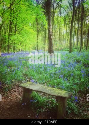 Wooden bench in bluebell flowers woods - Stock Image