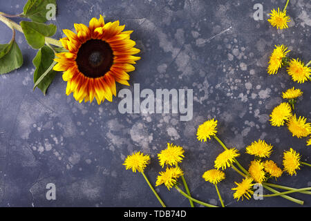 Beautiful, yellow dandelions and sunflower on a black background, top view, close-up. An interesting, unusual and creative look. Flat lay. - Stock Image