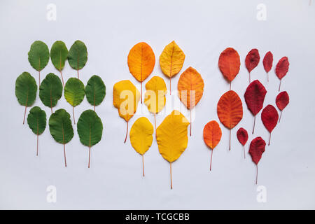 Colorful leaves on a white background in minimal style. The concept of changing the seasons from summer to autumn or the aging process. - Stock Image