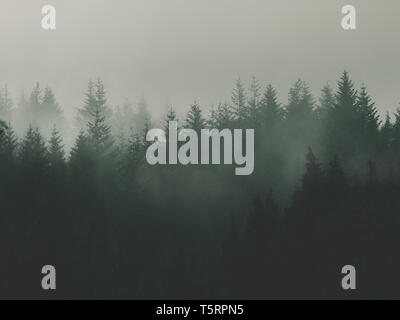nature background with moody vintage forest - Stock Image
