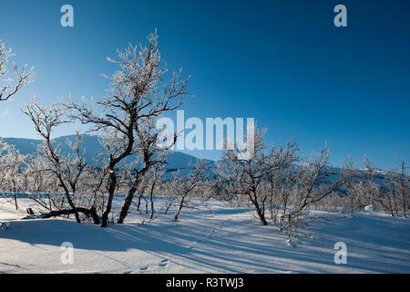 Frozen landscape near Kiruna, Sweden. - Stock Image