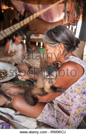 Piaraçu village (Aldeia Piaraçu), Mato Grosso State, Brazil. A Kayapo woman breaks open cumaru (Dipterix odorata, Tonka beans) nuts with a hammer and stone while holding a pet monkey. - Stock Image