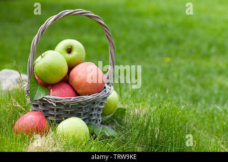 Fresh garden green and red apples in basket. On outdoor grass meadow with copy space for your text - Stock Image
