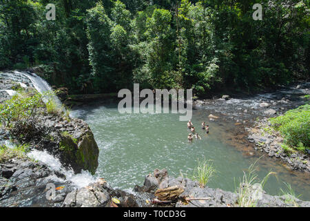 Family swimming at Nandroya Falls in Wooroonooran National Park, Far North Queensland, FNQ, QLD, Australia - Stock Image