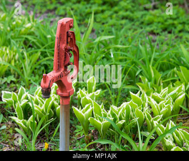 A Woodford Freezeless Yard Hydrant in a garden on Osborne Point in Speculator, NY USA - Stock Image