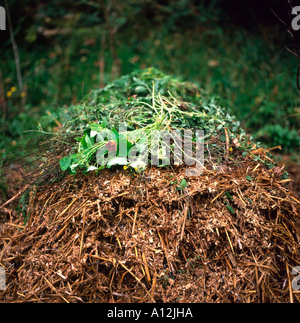 Compost heap in autumn incorporating sawdust, straw and green vegetation in rural Wales UK  KATHY DEWITT - Stock Image
