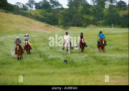 five cowboys and cowgirls running their horses through a field - Stock Image