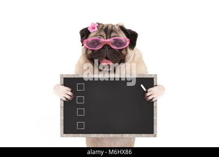 cute female pug dog puppy holding up blank checklist on blackboard with check boxes drawn with chalk, isolated on - Stock Image