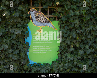 Wooden information sign on feeding of birds, Regents Park London UK - Stock Image