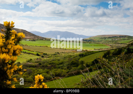 Farm fields and Dingle Bay - Stock Image
