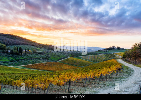 Farmhouse surrounded by vineyards at sunrise. Gaiole in Chianti, Siena province, Tuscany, Italy. - Stock Image