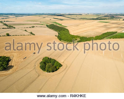 Harvest aerial landscape of combine harvester cutting summer wheat field crop and tractor trailer on farm - Stock Image