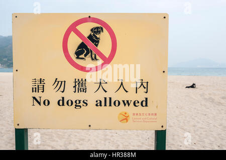Pet dog on a Hong Kong beach flouting the 'no dogs allowed' rule - Stock Image