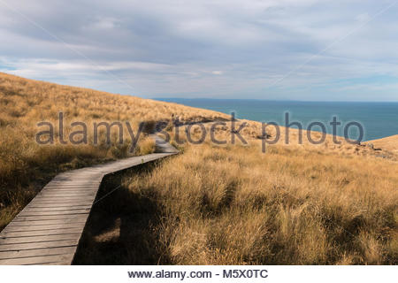 View to ocean from Godley Head Coastal Walk, Canterbury, New Zealand - Stock Image