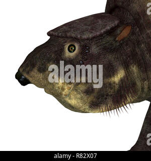 Glyptodont Mammal Head - Glyptodont was a herbivorous mammal that lived in North America during the Pleistocene Period. - Stock Image