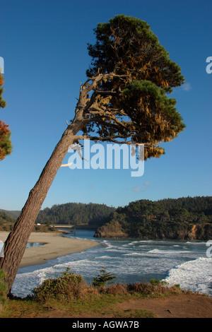 Pacific Ocean Mendocino California - Stock Image